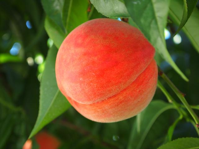 桃の霊力はすごい!