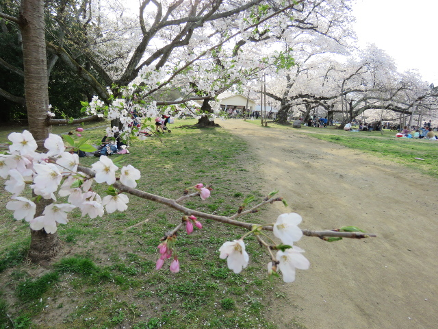 三神峯公園歩道