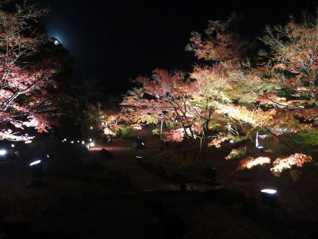 松島円通院の紅葉ライトアップ(石庭3)