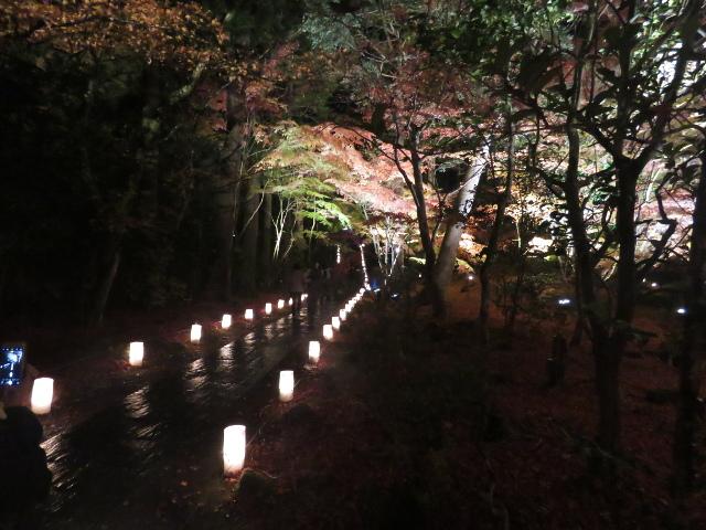 松島円通院の紅葉ライトアップ(三慧殿1)