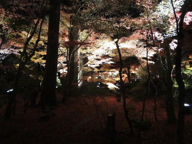 松島円通院の紅葉ライトアップ(三慧殿2)