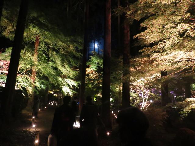 松島円通院の紅葉ライトアップ(三慧殿4)