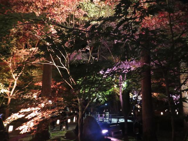 松島円通院の紅葉ライトアップ(三慧殿5)