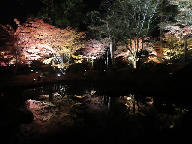 松島円通院の紅葉ライトアップ(心字の池2)