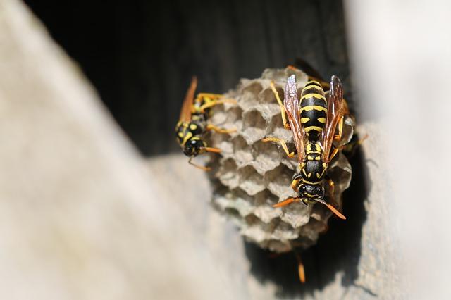 蜂の巣の駆除は作り始め時に行うのが鉄則