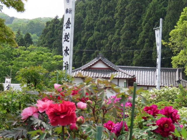 金蛇水神社の牡丹園