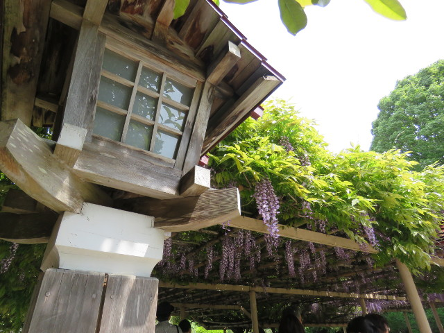 金蛇水神社の藤棚