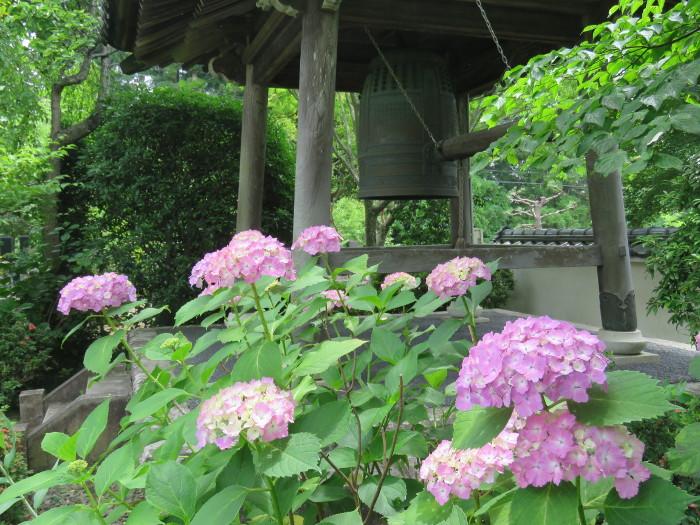 仙台のあじさい寺資福寺8