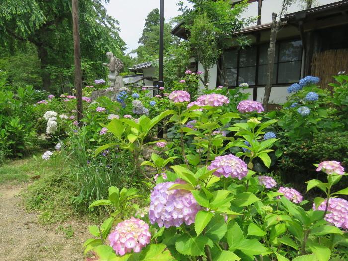 仙台のあじさい寺資福寺10