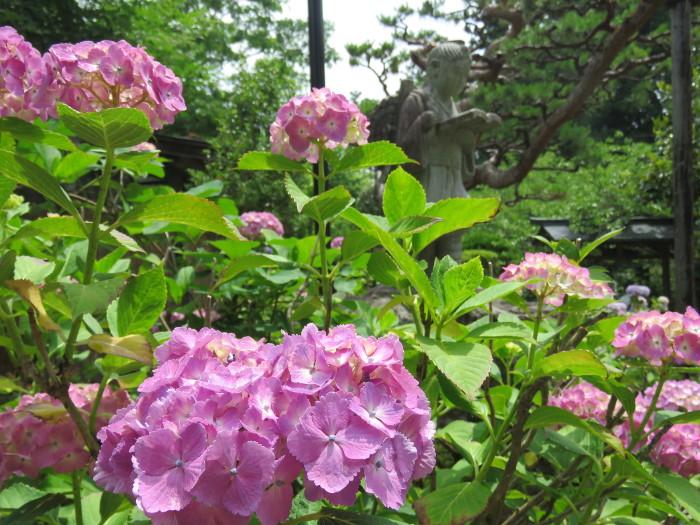 仙台のあじさい寺資福寺11