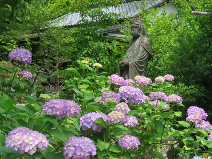 仙台のあじさい寺資福寺12