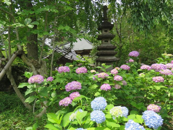 仙台のあじさい寺資福寺13