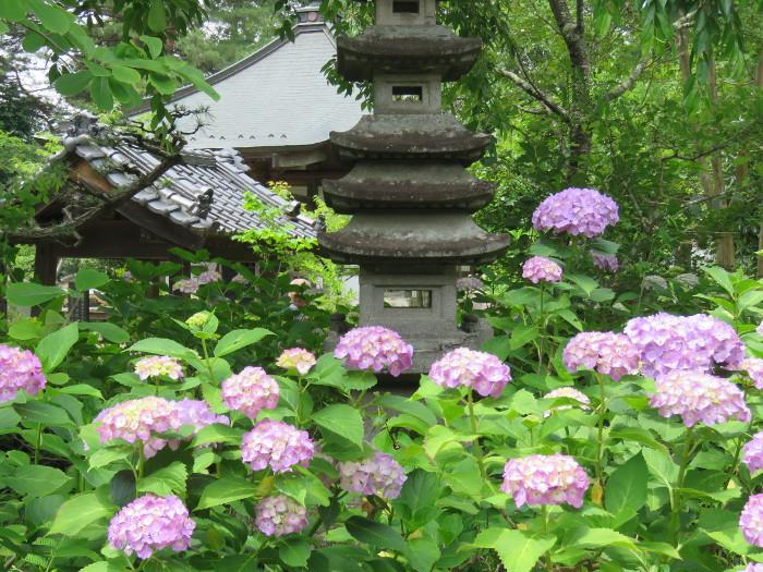 仙台のあじさい寺資福寺14