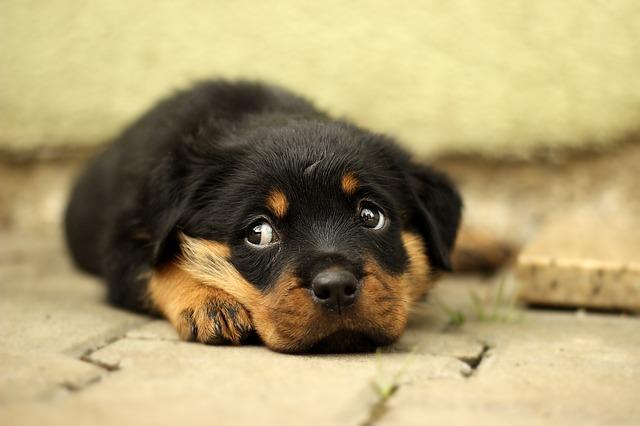 犬が分離不安になる原因はさまざま