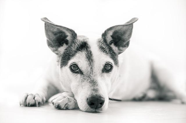 犬の噛み癖にはスキンシップが大切
