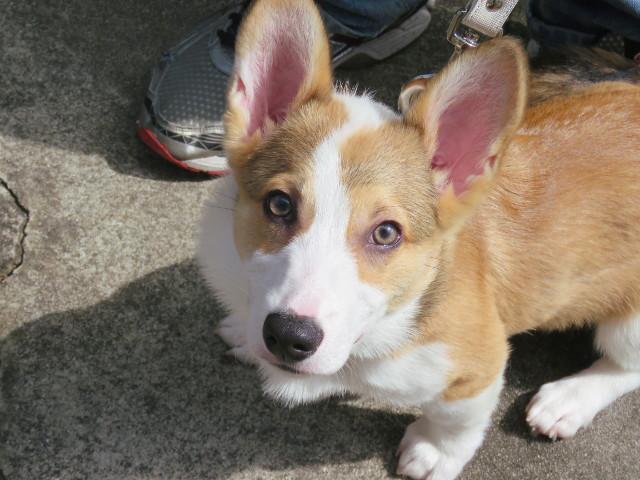 犬の分離不安サプリメントにはどんなのがあるんだろう?