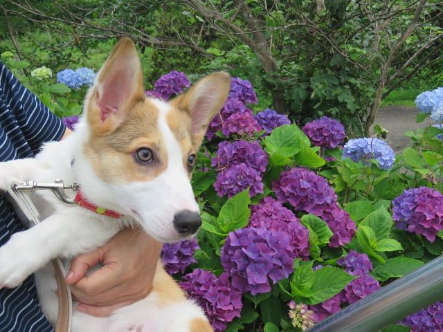 犬の前立腺肥大サプリメントはどれがいい?