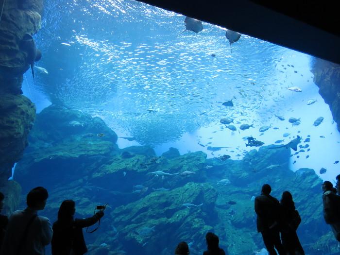 仙台うみの杜水族館は子供にもカップルにも大人にもおすすめ