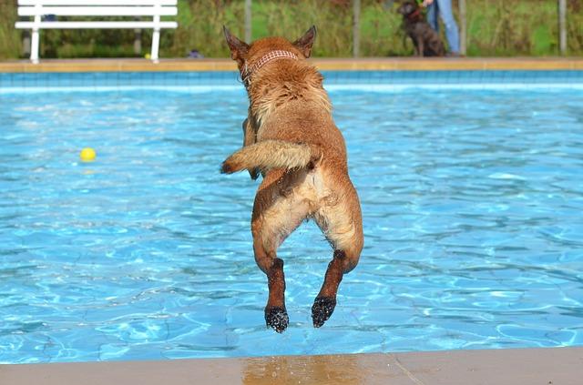 プールは犬のダイエットに最適